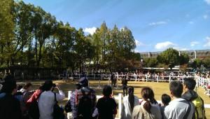 淀競馬場馬のショー