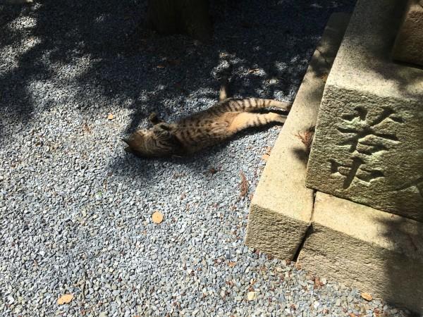 御殿山神社の猫