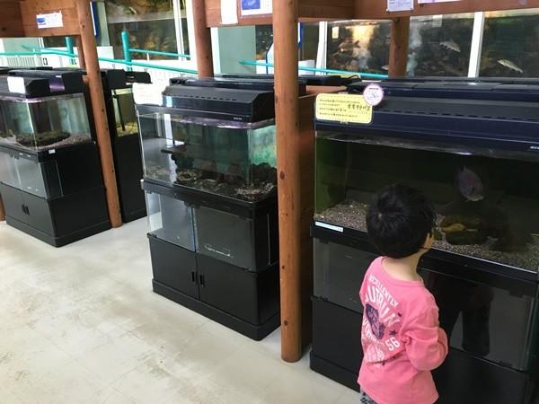 あくあぴあ芥川の水族館