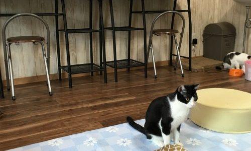 茨木市の猫カフェ「かぎしっぽ」に行ってきた!
