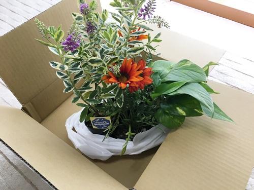生け花用のお花