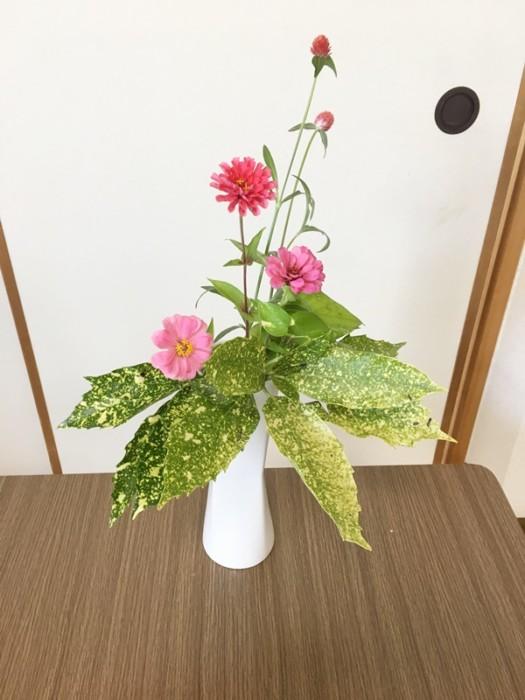 百日草 ikebana