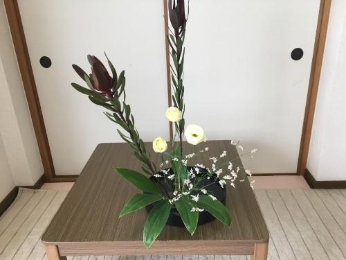 リューカデンドロン 生け花