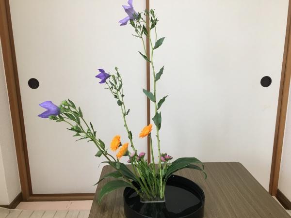 生け花 ガーベラ 横から