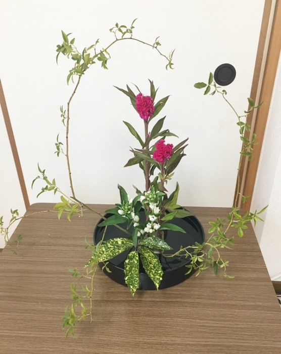 ケイトウ 生け花